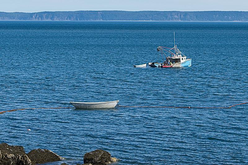 herring2